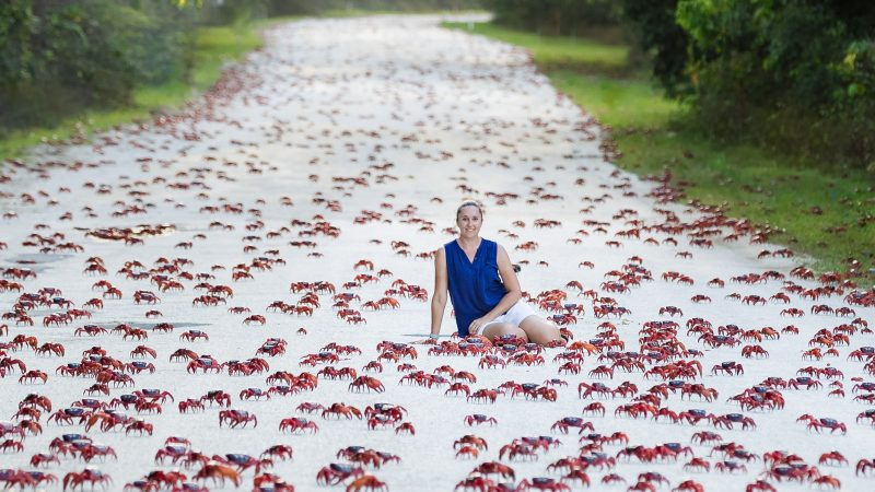 A red sea! Mum surrounded by millions of crimson crabs as they scurry to Christmas Island shoreline Image