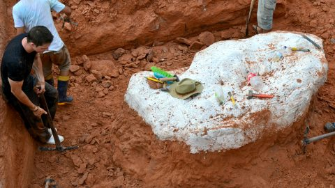 Brazilian scientists discover new species of oldest long neck dinosaur Image