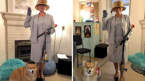 Royal superfan takes adorable therapy corgi into schools – dressed as the queen Image