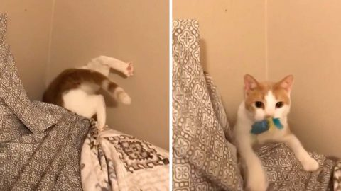 Hilarious cat won't rest until he recovers his toy Image