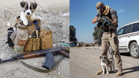 From Syria to Essex: Pooch travels 3,000 miles to reunite with soldier who saved her from a explosion Image