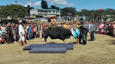 Indian villages use bull to showcase high jump skills during annual festival Image