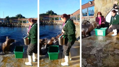 Zoo teaches incredible recycling-mad sea lions to pick up litter Image