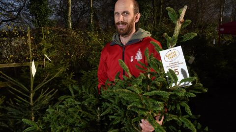 A fir-m favourite! Families rent same christmas tree for up to ten years - becoming so attached they even name it Image