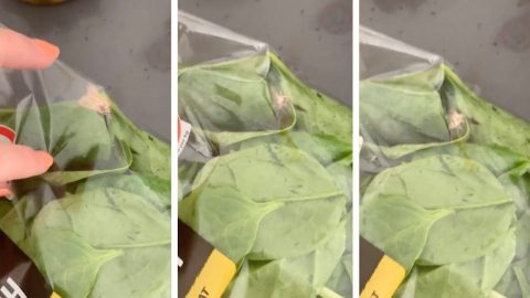 Live moth found flying around in sealed 'washed and ready to eat' spinach bag Image
