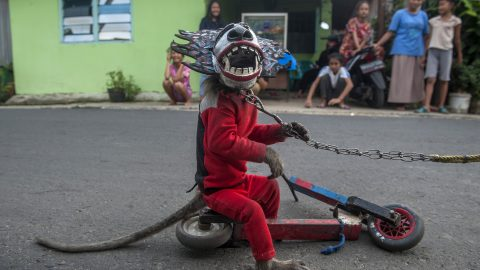 Disturbing footage shows chained monkey forced to walk on stilts and wear mask to entertain passers-by Image
