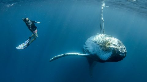 Stunning photos show woman synchronise swimming with humpback whale Image