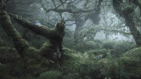 Middle earth? Amazing fairytale forest looks like Lord of the Rings film set Image