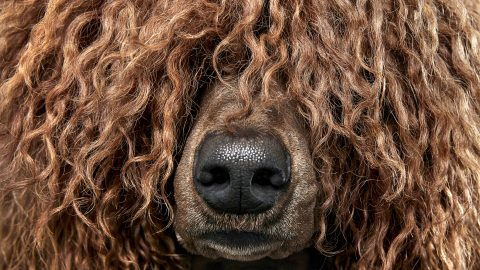 Hair of the dog – Unique photography series captures diverse textures and styles of dogs' fur Image