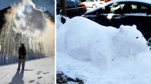 Snow place like home! Boiling water turns into stunning ice clouds and animal lovers make incredible sculptures as Chicago plunges into polar vortex deep freeze Image