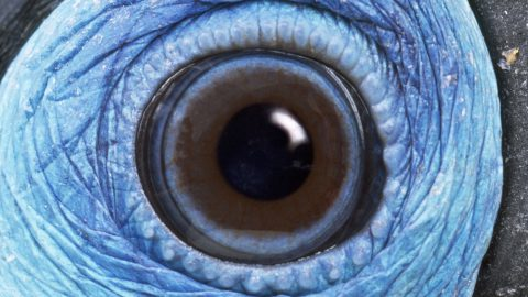 No eye-dea what that could be! Animal eye close-ups captured in gallery – but can you guess which beasts they belong to? Image