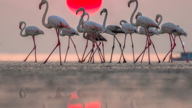 Flocking fantastic - three headed flamingo captured on the mesmerising seashore Image