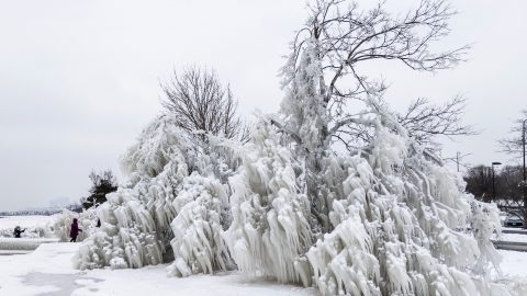 Stunning 360 footage shows how Arctic temperatures have frozen moisture-soaked trees across North America Image