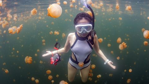 Are you ready for this jelly? Stunning images show hundreds of jellyfish surrounding brave female divers Image