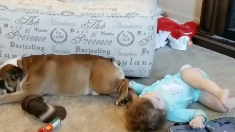 Hilarious moment toddler confuses dogs 'boys' for toy Image