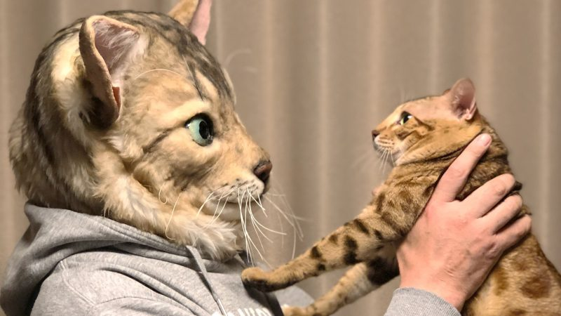Check Meow-t! Sculptors Create Creepily Realistic Masks Replicate The Face Of Your Fur-ever Friend Pet For $2,700 Image