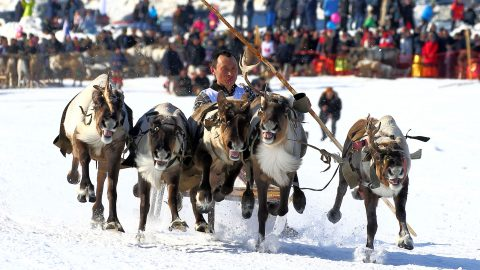 Making It Rein! Epic Photos Reveal Drama Of Racing Reindeer Image