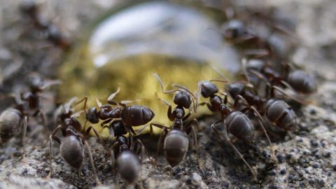 Incredible Macro Footage Shows Colony Of Ants Devouring Every Drop Of Delicious Honey Image