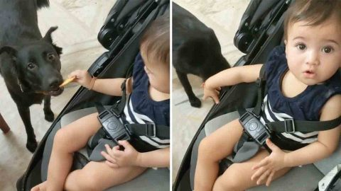 Baby Teasing Dog With Biscuit Gets Karmic Justice When Its Snatched Out Of Her Hand Image