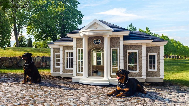 Uk Company Build Bespoke Luxury Dog Manors Which Cost More Than A Three Bedroom House Image