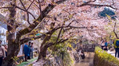 Stunning Timelapse Footage Captures Beauty Of Japan From Cherry Blossoms To Bustling Supercities Image