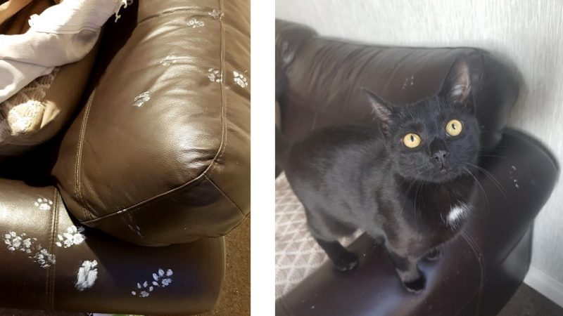 Pawsible Deniability? Owner Returns Home To Find Mischievous Moggy Has Covered £1,500 Sofa In White Paint Paw Prints Image