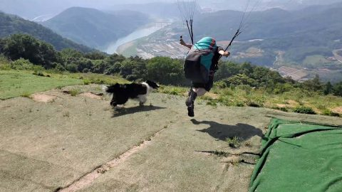 Ruff Ride! Confused Pooch Chases Paragliders As They Take Off From Massive Hill Image