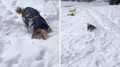 Lever Dog Uses Survival Technique After Falling Into Freezing Lake Image