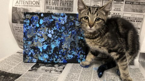 Paw-casso! Cute Pics Show Kittens Painting To Help Them Find A New Home Image