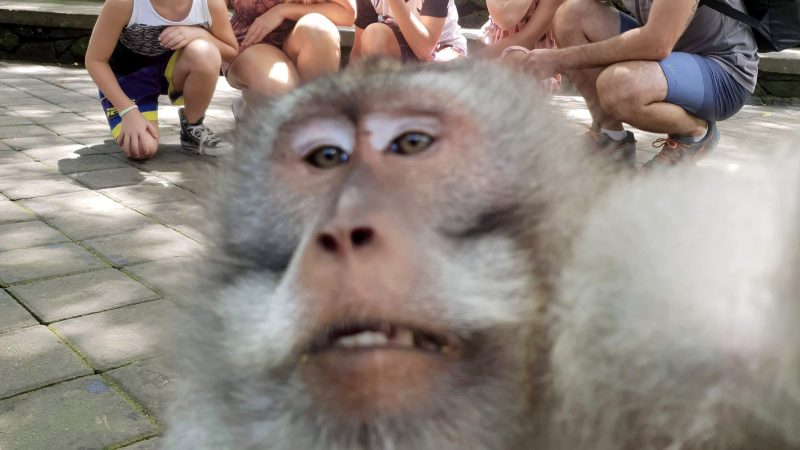 Cheeky Monkey Photobombs Family Holiday Snap And Gives Them The Middle Finger Image