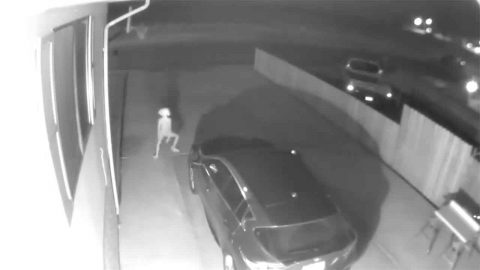 Bizarre CCTV Footage Catches Figure Shape Of Dobby The House Elf On Family's Driveway Image