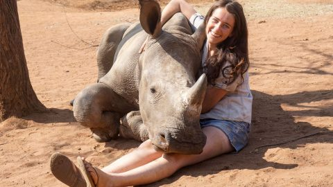 Heartwarming Moment Relaxed Rhino Lets Girl Belly Rub And Kiss Him Image
