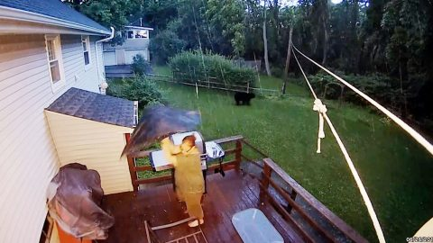 Bear-becue Scare! Woman Grilling On Bbq Forced To Flee After Huge Black Bear Appears In Garden Image