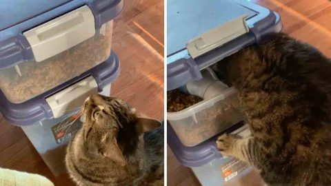 Crafty cat opens snack box by pressing seal with nose Image