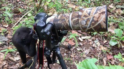 Say Cheese! Monkey Photographer Caught On Camera Image