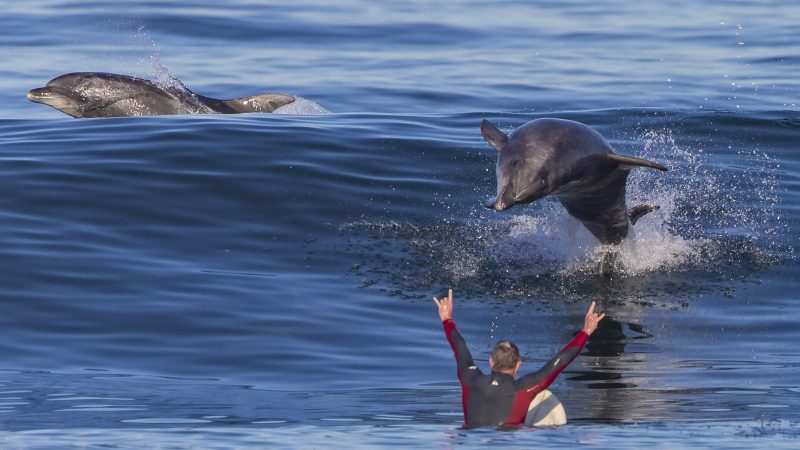 HAIR RAISING PHOTOS SHOW SURFER'S NEAR MISS FROM 'FLYING DOLPHIN' Image