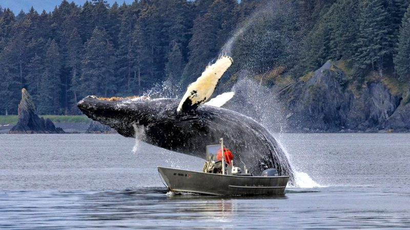 AMAZING PHOTO SHOWS WHALE JUMPING OVER FISHERMAN Image
