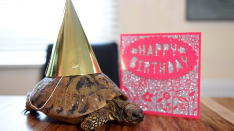 WORLD'S OLDEST PET CELEBRATES ITS 121ST BIRTHDAY AS OWNER SAYS IT'LL LIVE ON FOR ANOTHER 50 YEARS AT LEAST Image