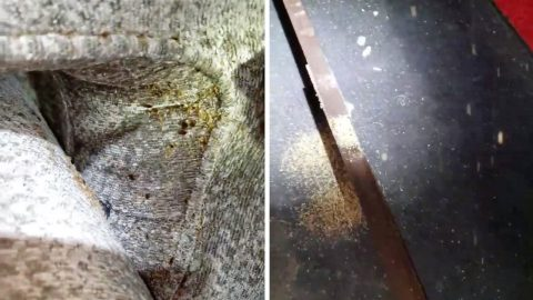 WATCH THE BED BUGS DON'T BITE! PEST CONTROL SERVICE FINDS SWARM OF BUGS CRAWLING UNDERNEATH OWNER'S BED IN CREEPY VIDEO Image