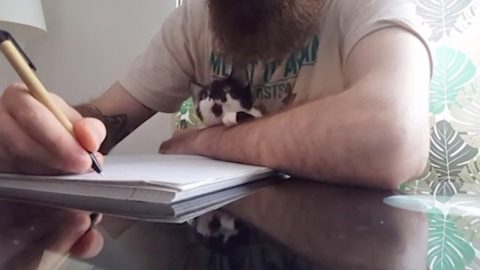PLAY WITH ME MEOW! THIS KITTEN CONSTANTLY STOPS OWNER WORKING WITH CUTE ANTICS Image