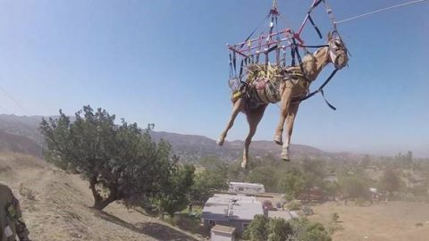 DRAMATIC VIDEO SHOWS HELICOPTER RESCUING HORSE FALLEN DOWN STEEP HILL Image