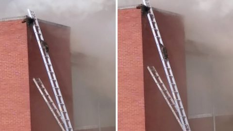 QUICK THINKING FIREFIGHTERS SET UP LADDERS SO RACCOON PAIR CAN RESCUE THEMSELVES FROM FIRE Image