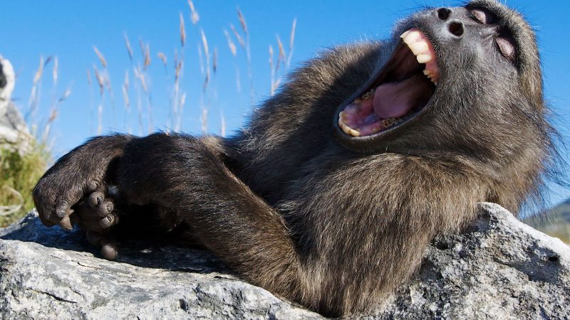 ARE WE KEEPING YOU UP? HILARIOUS PHOTOS SHOW YAWNING ANIMALS Image