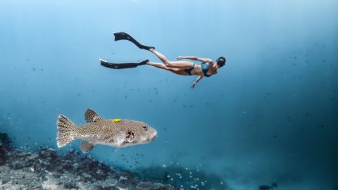 FANCY SEA-ING YOU HERE! STUNNING SHOTS CAPTURE SCANTILY-CLAD FREE DIVERS ALONGSIDE CREATURES OF THE DEEP Image