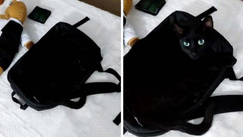 THE PURFECT CAMOUFLAGE! BLACK CAT BLENDS IN WITH BLACK BACKPACK ONLY VISIBLE WHEN OPENS ITS EYES Image