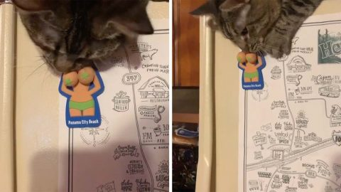 CHEEKY CAT PLAYS WITH NAUGHTY FRIDGE MAGNET Image