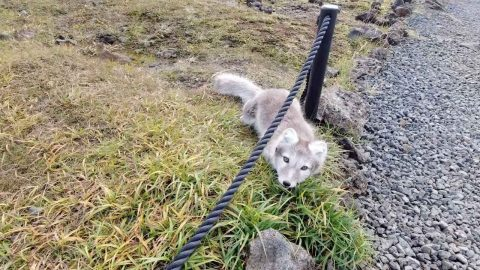 THIS MAN CAPTURED HIS ENCOUNTER WITH THE RARE ARCTIC FOX AS HE GETS WITHIN FEET Image