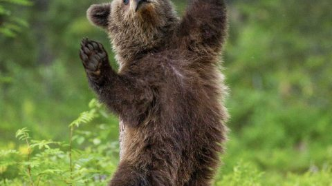 BEARLY MISSING A BEAT – BEAR LOOKS LIKE HE'S POLE DANCING WHEN SCRATCHING BACK Image