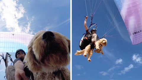 PUP IN THE SKY! ADVENTUROUS PARAGLIDING POOCH LOVES SAILING THE SKIES WITH HIS OWNER Image
