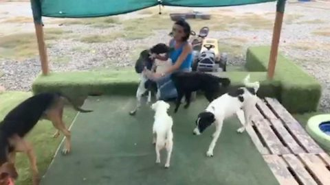 MUM SPENDS £40K OF LIVE-SAVINGS TO SAVE STRAY DOGS ABROAD AFTER QUITTING UK JOB Image